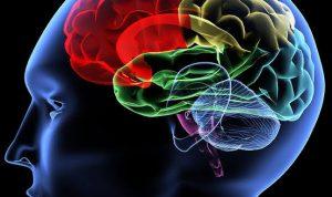 Ciri-ciri seseorang memiliki IQ Tinggi. Foto internet for referensirakyat.co.id